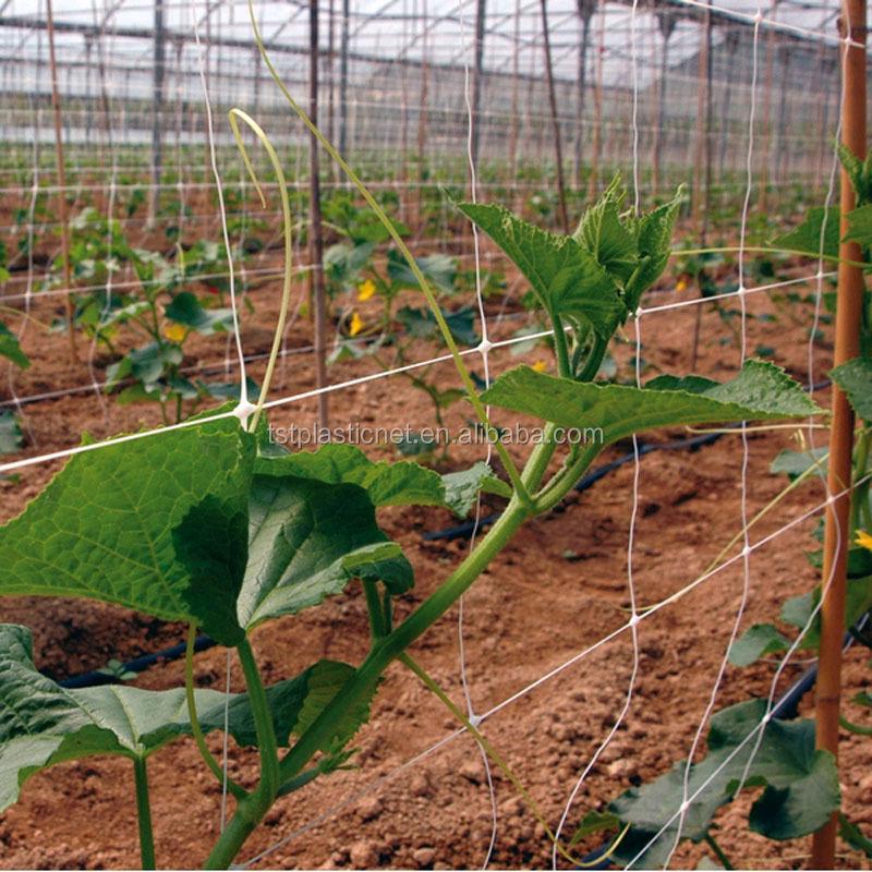 Finden Sie Hohe Qualität Bambus Pflanze Gitter Hersteller und Bambus ...