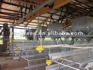 Poultry Shed Layer Cage manufacturer with 20 years experience