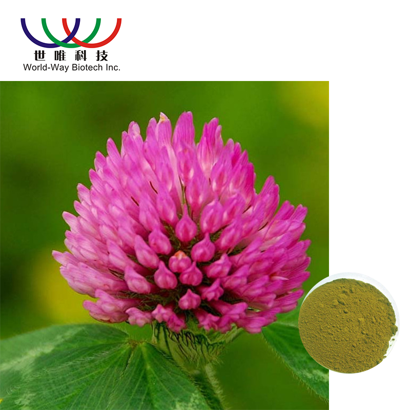 Hypolipidemic Top Grade Red Clover Extract For Women Health