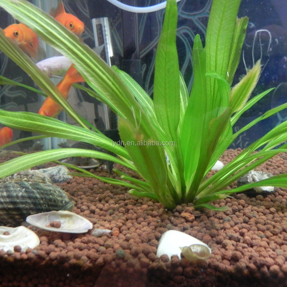 No Dust In Water Brown Red Clay Soil Aquarium Stone Decorative ...