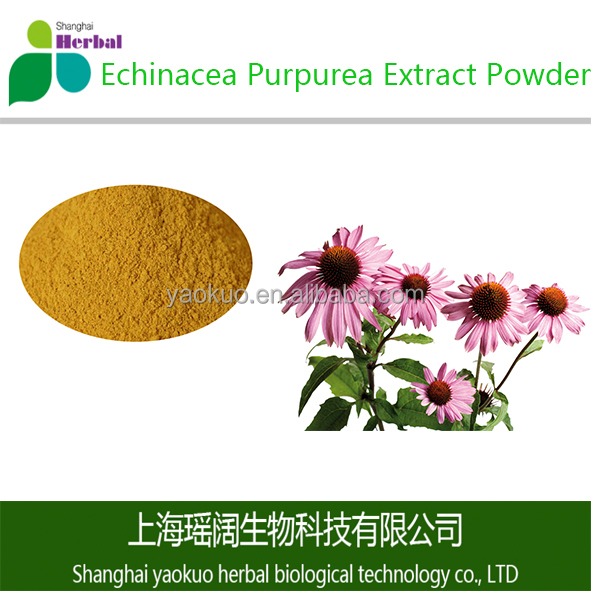 Natural and Healthy Echinacea Purpurea Extract Powder