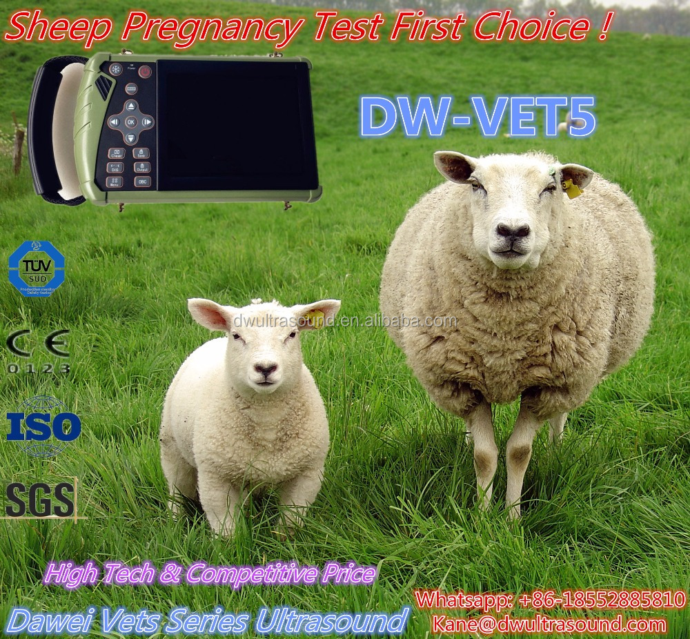 DW-VET5 cheapest palm veterinary portable pig ultrasound for pregnancy sheep, pig, cat and dog pregnancy exam