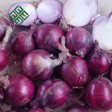export quality big red onions packing