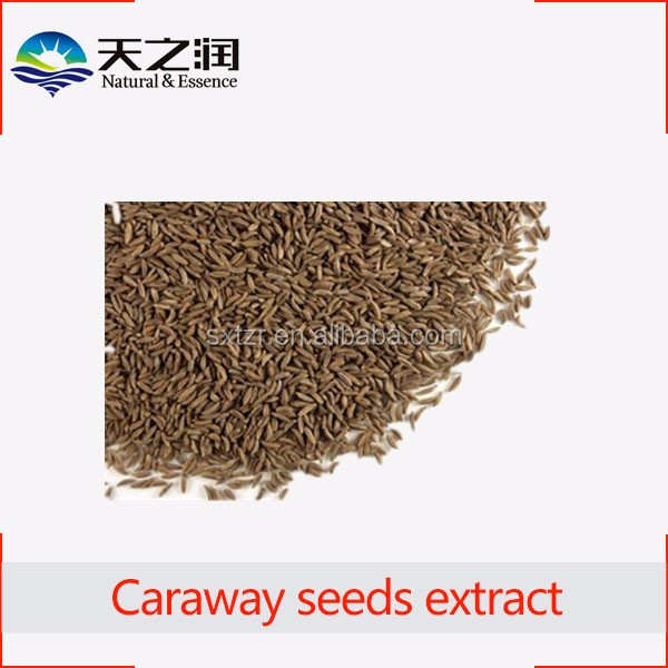 High Quality Caraway seeds extract Carum carvi extract