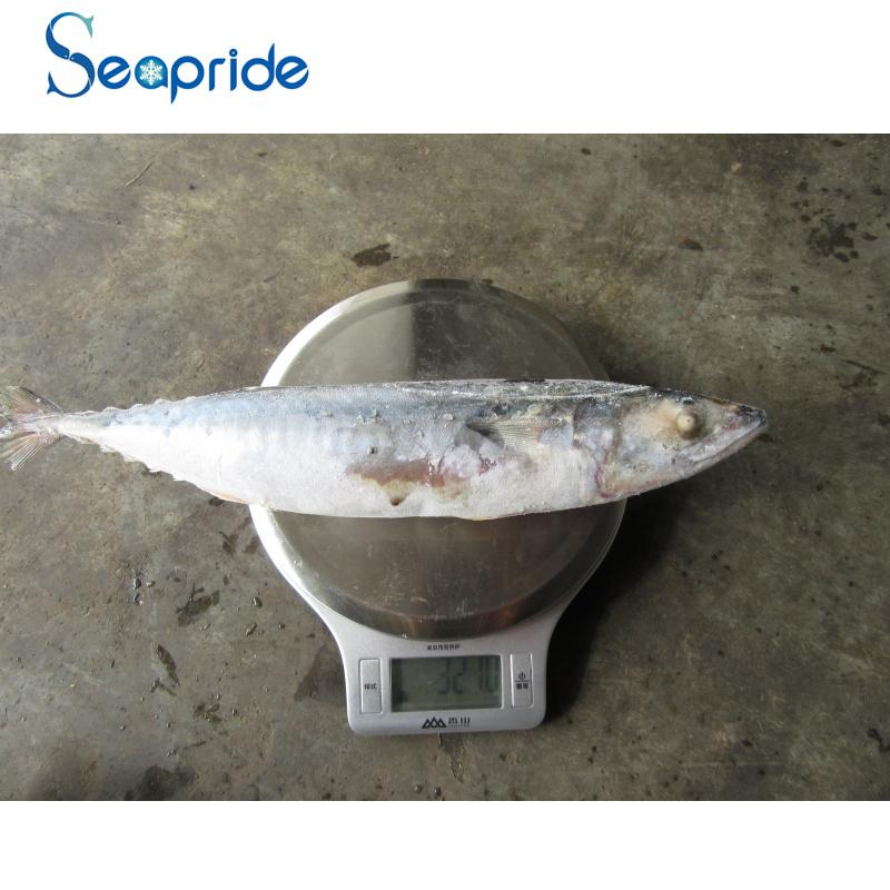mackerel 300-400G-8.jpg