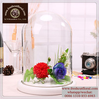 Small Glass Bell Jars For Preserved Roses