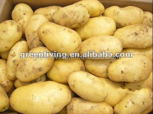 frozen fresh potato export to dubai(75-100gram)(100-150gram)(150-250gram up)