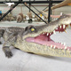 Realistic animal sculpturel animatronic walking crocodile