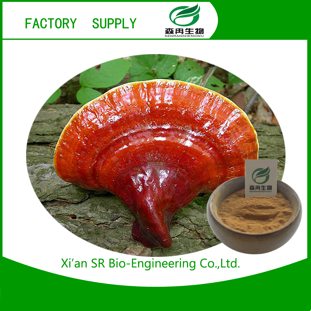 hot sale & high quality Ganoderma lucidum (Leyss.ex FR.) Karst. with low price