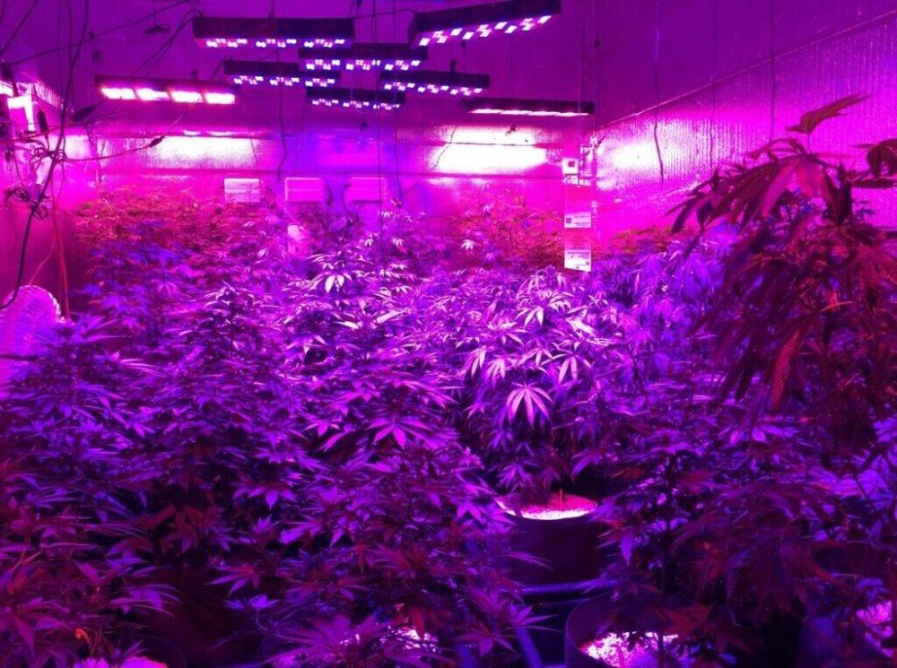 Cheap 1000 Watt Led Grow Lights For Us Indoor Plant Grow