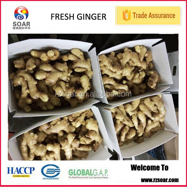 2015 spicy mature fresh ginger root