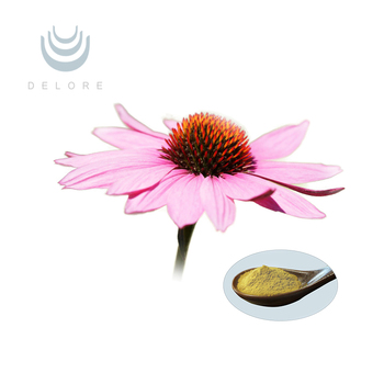 Professional Manufacturer Supply High Quality Echinacea purpurea Extract polyphenol