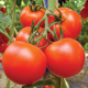 Unlimited growth hybrid tomato seeds Israel