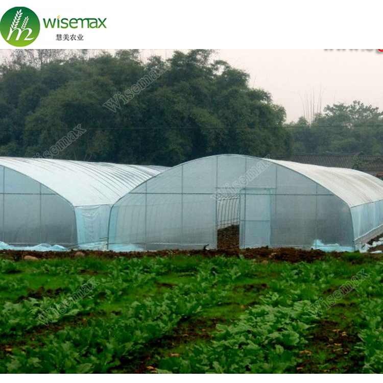 Agriculture single span plastic tunnel small green house for tomato