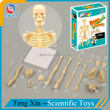 Funny kids science kit human body model