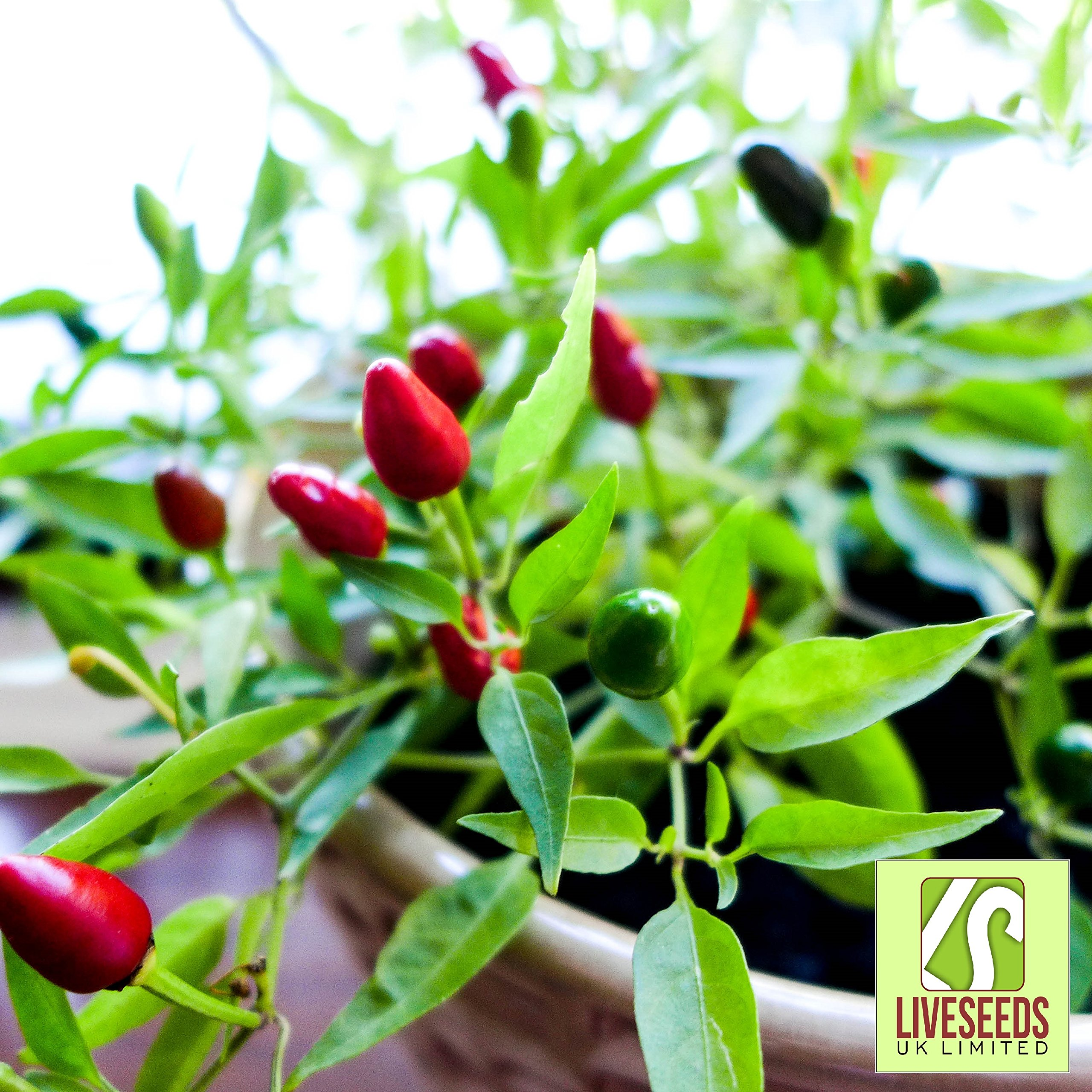 Liveseeds Hot Pepper Cayenne Chilli  10 seeds