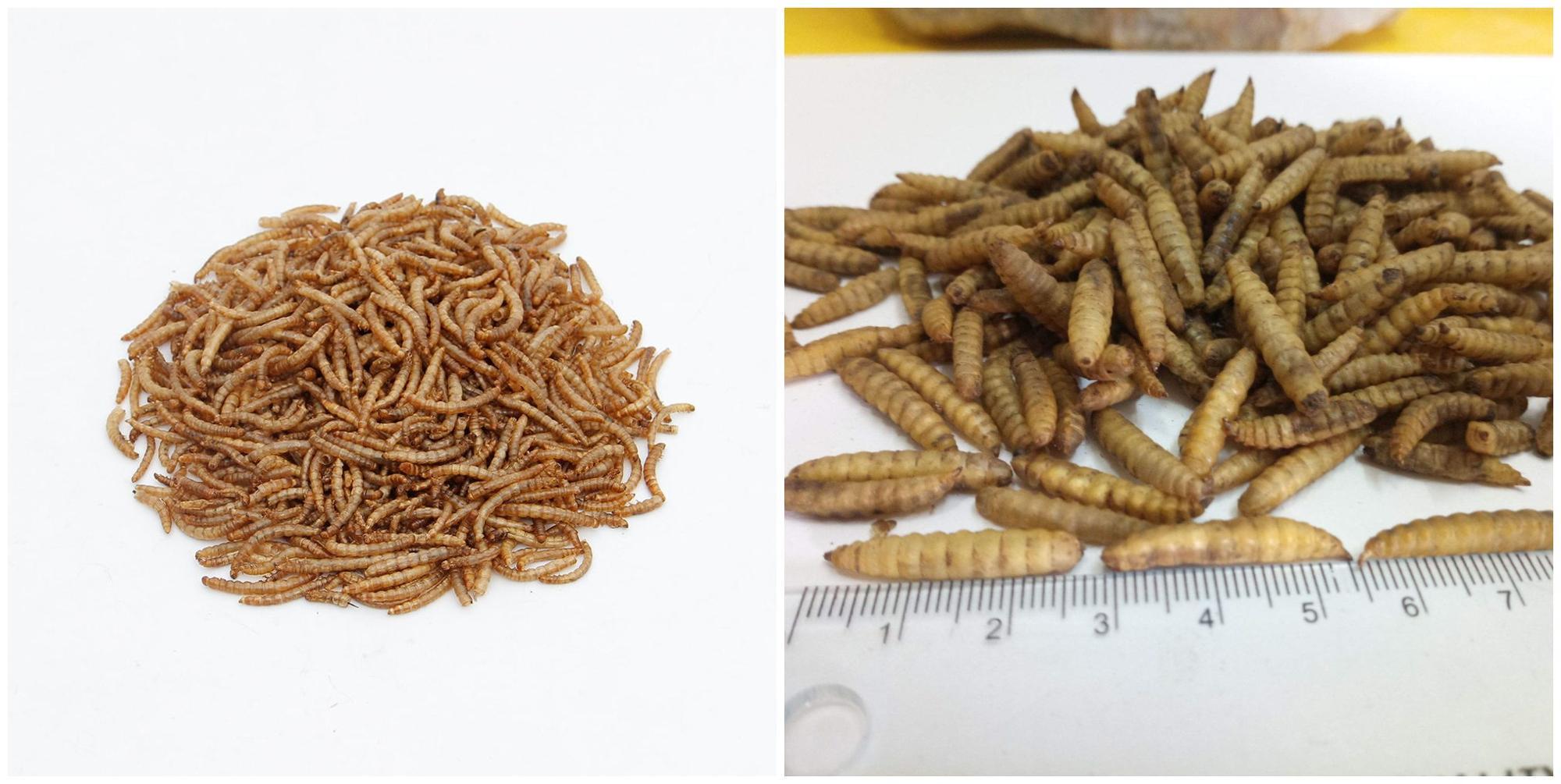 Alto Tasso di Schiusa 90% Tibet Artemia Cisti/Uova di Artemia per Acquario Cibo per Pesci
