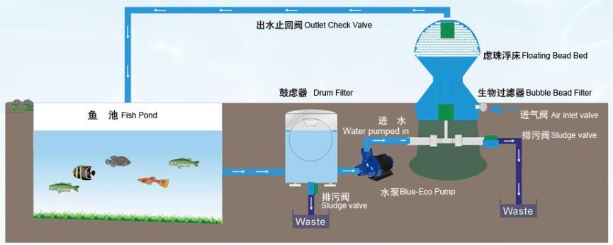 Layout Design For Aquaculture Fish Farm Ras Recirculation