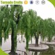 2017 Large Outdoor Green Plastic Willow Leaves Plants Artificial Weeping Willow Quality Tree For Garden Decor