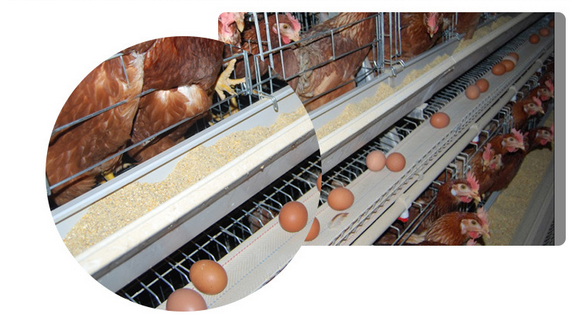 Chicken Breeding Cage/Uganda Poultry Farm Automatic Chicken Layer Cage/Chicken Wire of H type