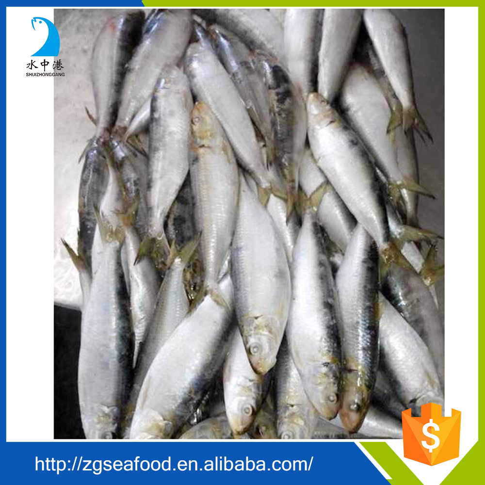 Fish sardine product and ISO Certification frozen sardine fish
