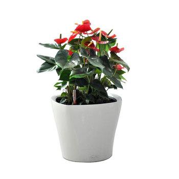 Paper Mache Flower Pots Planters Buy Paper Mache Flower Pots