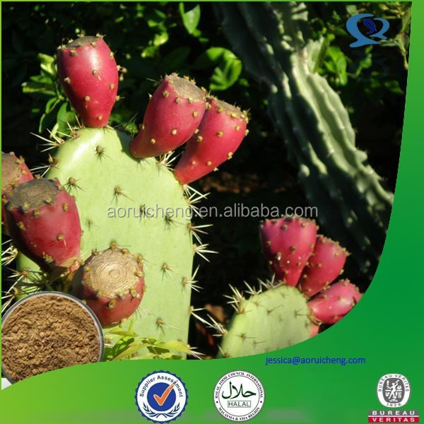 nopal cactus extract, prickly pear extract powder, prickly pear extract