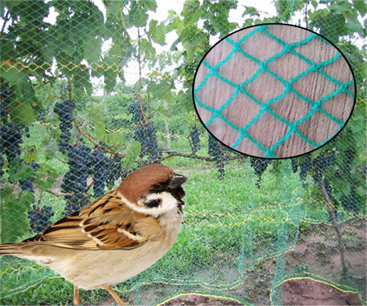 Newest Design Outdoor Customized agricultural bird mist nets