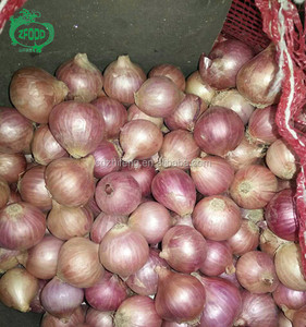 High Quality Fresh Small Onion Shallot for sale