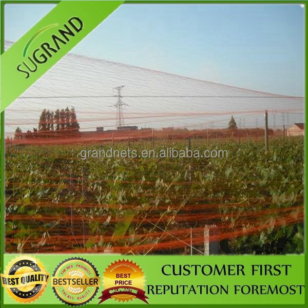 Customized color factory supply anti bird netting for sale,bird nets for catch bird