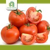 good brand bulk tomato fresh and past cherry tomatos for sale