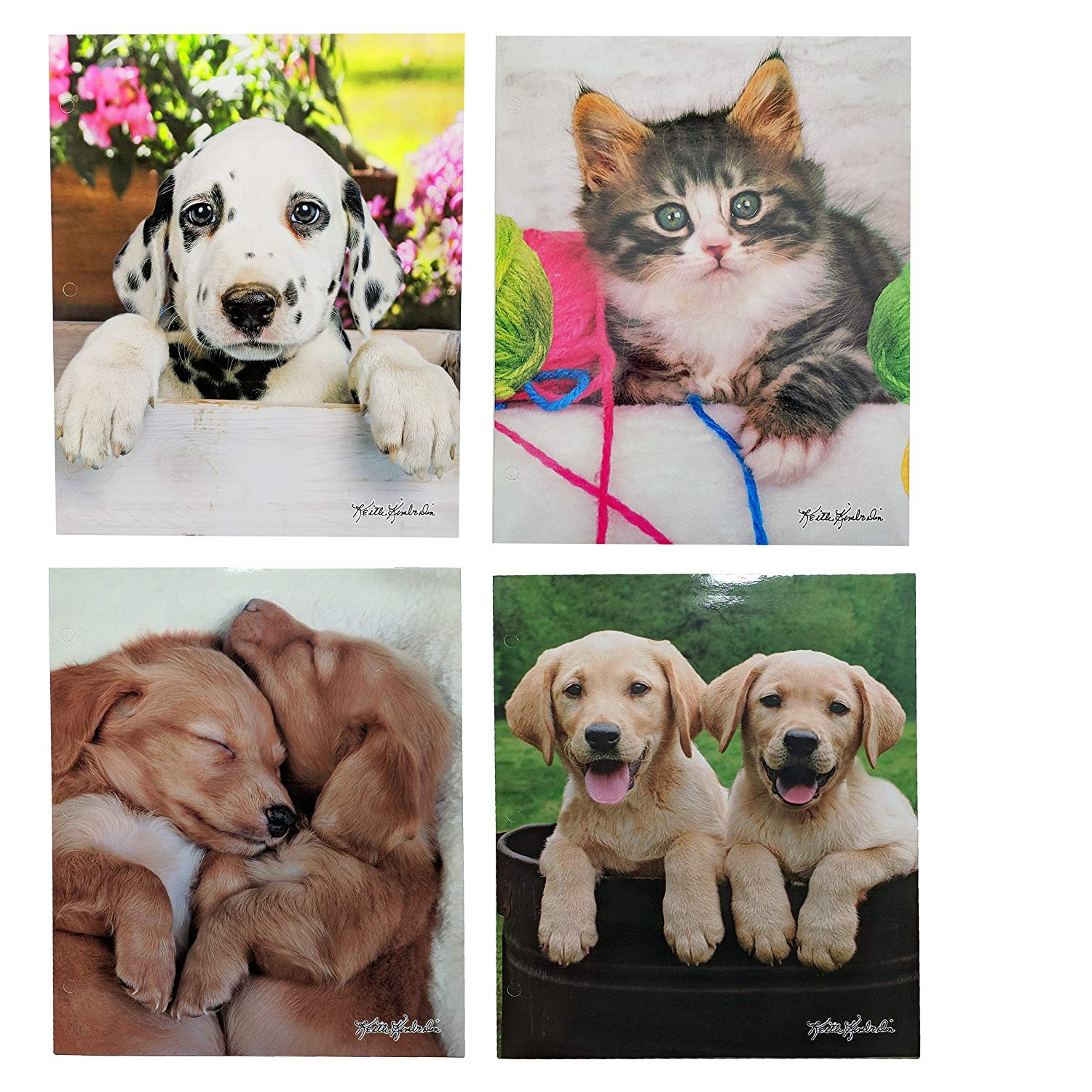 Cheap Pocket Puppies Find Pocket Puppies Deals On Line At Alibabacom