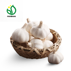 China Fresh Pure White Garlic 2019 new crop