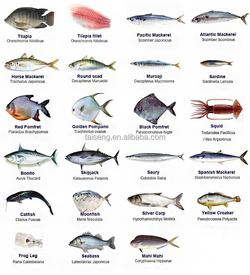 China Seafood Fish Buyers, China Seafood Fish Buyers Manufacturers