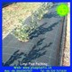 Virgin pp plastic black anti weed mat,agricultural used anti grass woven fabric,anti root protection cloth for tomato growing