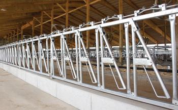 Cattle Headlock Cattle Feeder Head Locks - Buy Cow Head Locks,Cattle Feeder  Head Lock,Cow Headlock Product on Alibaba com