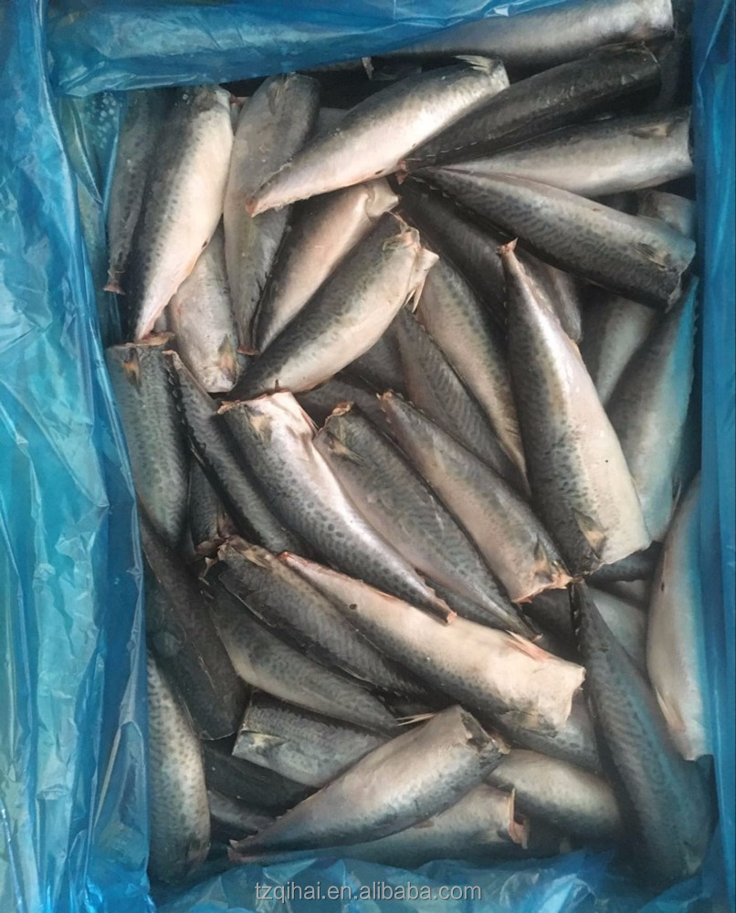 Frozen Mackerel Fish HGT