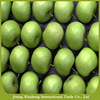 Fresh high quality cheapest price spical green apples