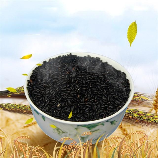 Hei Shu Zi High Quality Organic Animal Feed Broom Corn Millet For Sale -  Buy Black Broom Corn Millet,Animal Feed Broom Corn Millet,Proso Millet