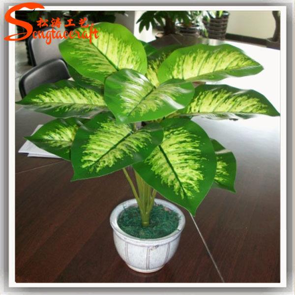 Names of plants plastic pots for plants ornamental plants - Plantas ornamentales de interior ...
