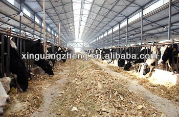Professional Design Steel Structure Cow Farm House