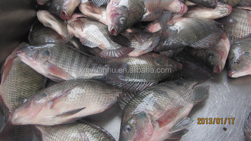 Dried Tilapia Fish Farming