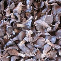 Carbonized Palm Kernel Shells