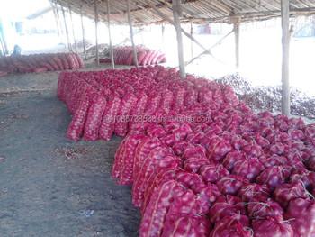 Fresh Onion - Commission Agent In Dubai Market - Buy