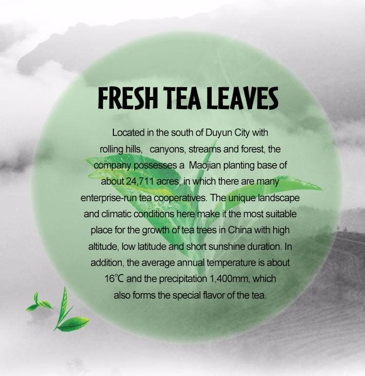 top standard iso natural organic white tea fair trade white loose tea manufacturers - 4uTea   4uTea.com