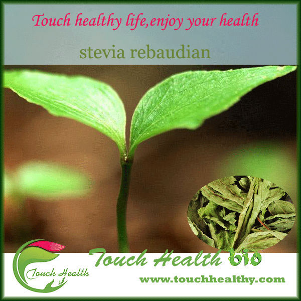 100% natrual stevia rebaudiana extract for Stevia/stevia dried leaves