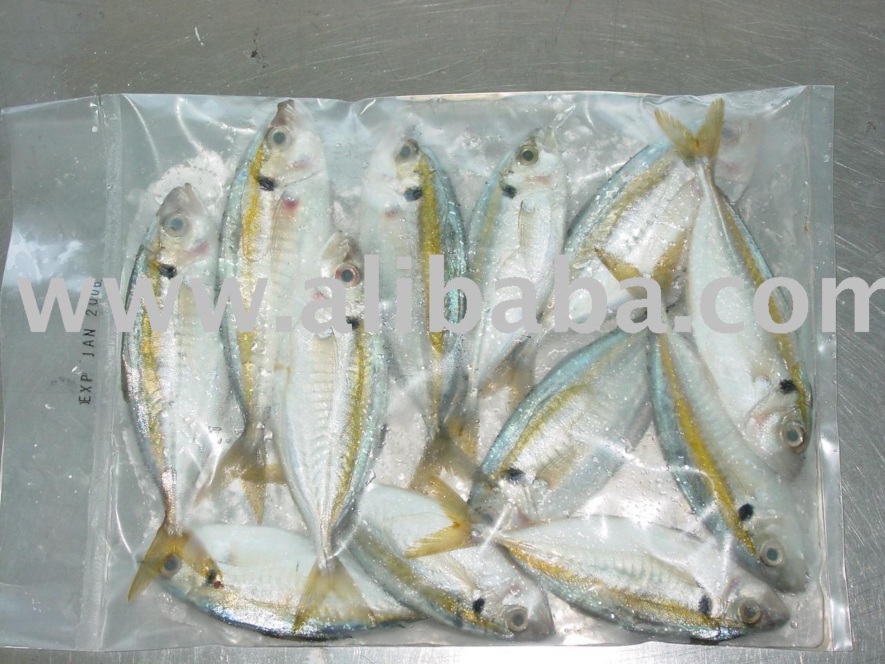 Kunning Fish - Buy Frozen Fish Product on Alibaba com