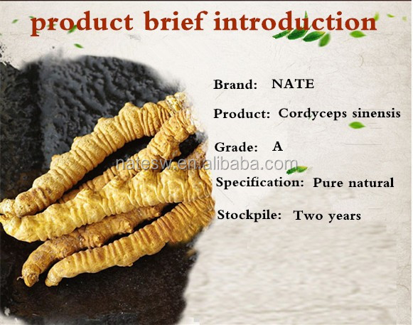 Immunity enhancement cordyceps sinensis mushroom extract 8% Mycelium