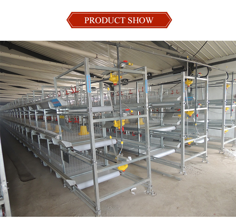 Best quality poultry battery cage for duck
