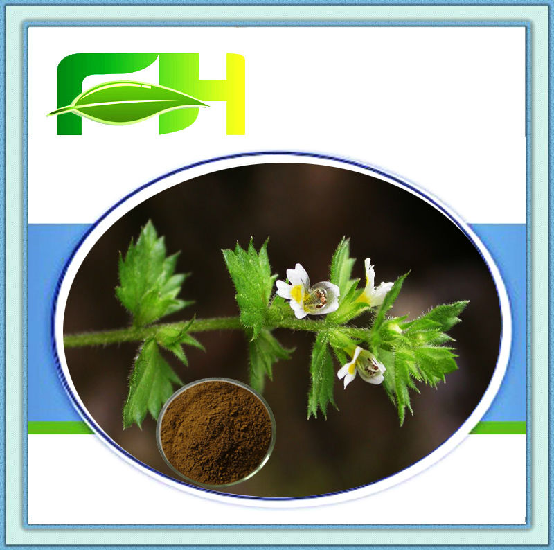100% Natural Eyebright Extract/3%-10% Flavonoids (HPLC)/Extract Ratio 5:1 10:1